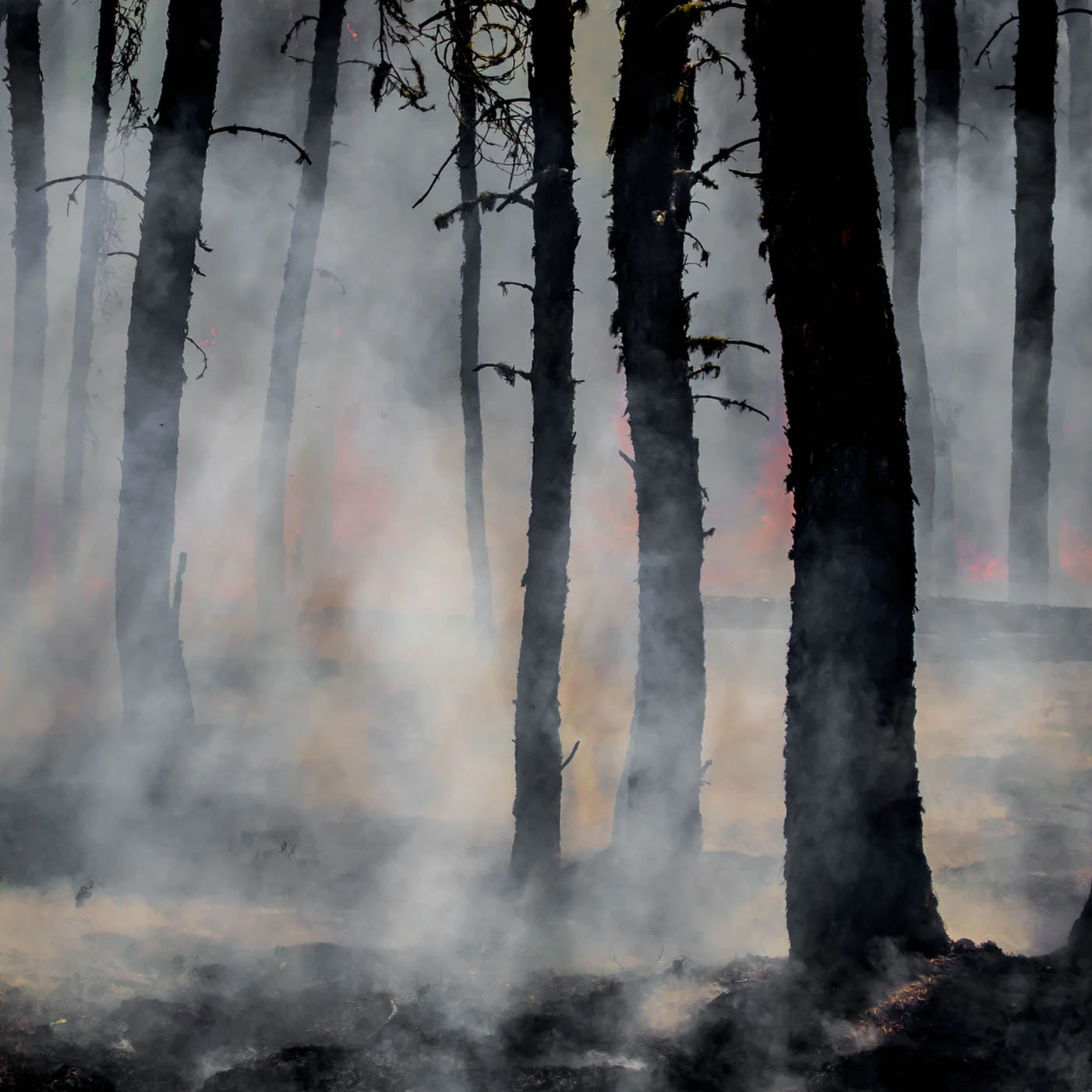 Persistent Autonomous Monitoring For Early Detection and Prediction Of Wildfires